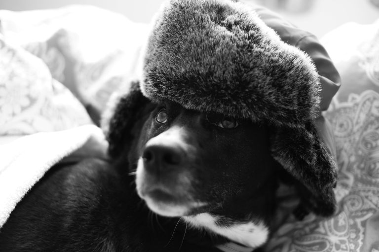 dog in kossak hat
